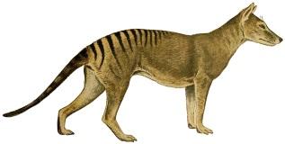 Genera mammalium Madrid,1919. http://biodiversitylibrary.org/item/101090
