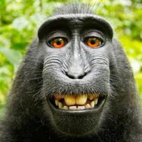 85730600_monkey2