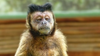 discovery-in-monkeys-could-lead-to-treatment-for-blindness-causing-syndrome-326456