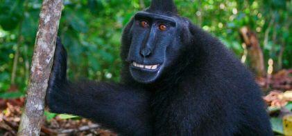 monkey-main-1280x600-1