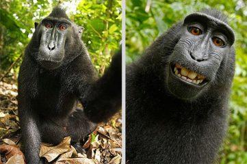 monkey-selfie-inline
