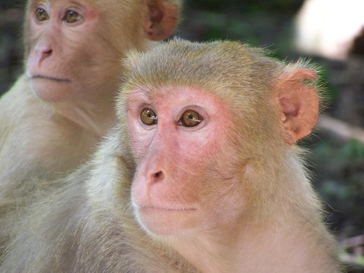 monkeysdonot