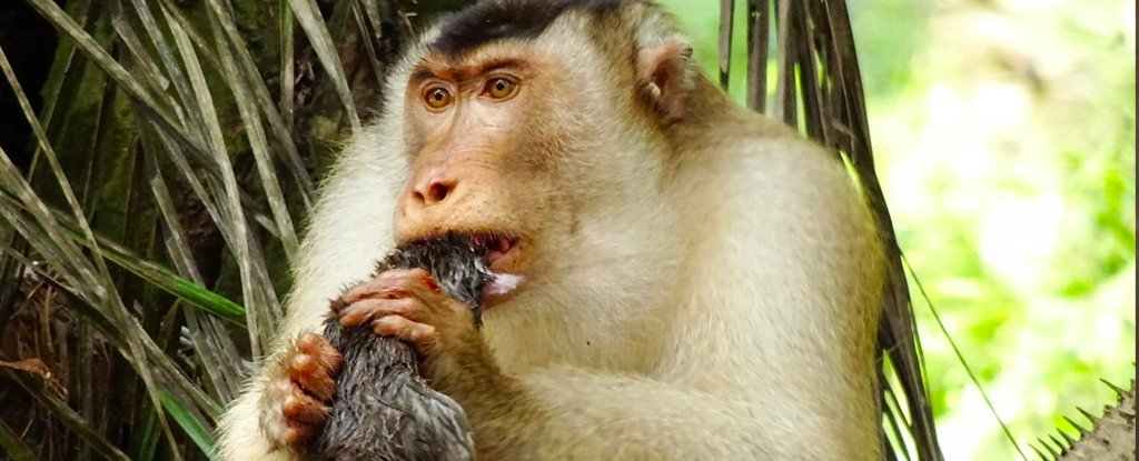 rat_eating_monkey_1024