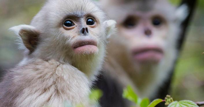 snub-nosed-monkeys-jacky-poon-promo-6880